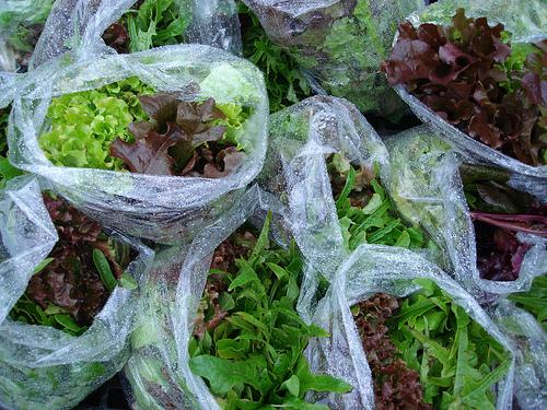 Bags Of Lettuce