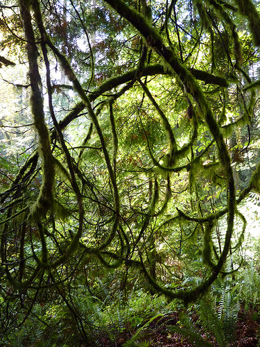 Curly mossy branches