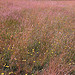 An image of a pink and green meadow