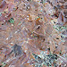 Leaves plastered flat and edged with frost